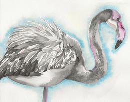 Fledgling Flamingo