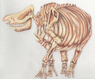 Rhino Bones l