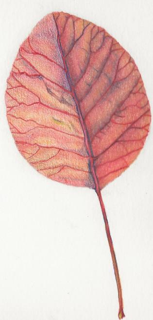 Autumn Leaf Front