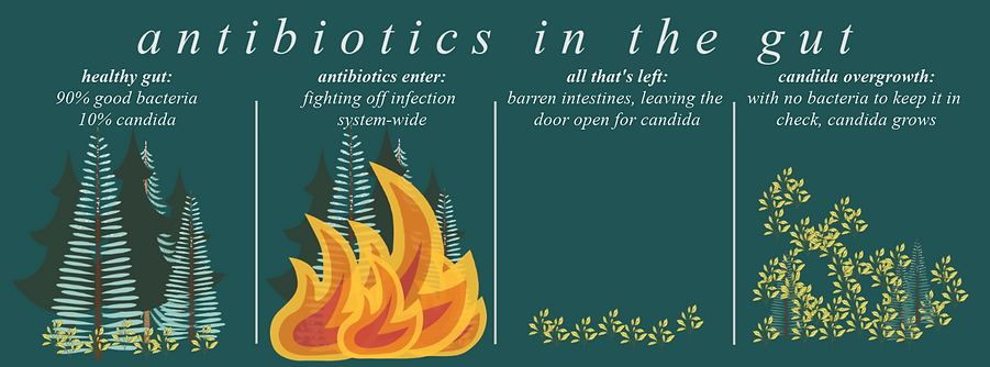 candida forest fire italics.png