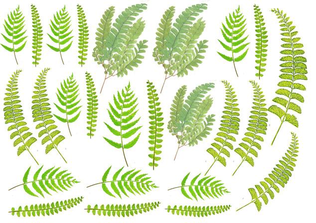 ferns printable.jpg