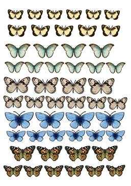 Butterflies printout1.jpg