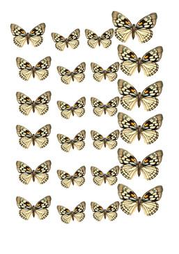butterlies.jpg