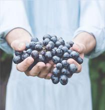 Garig, restauration collective en Provence