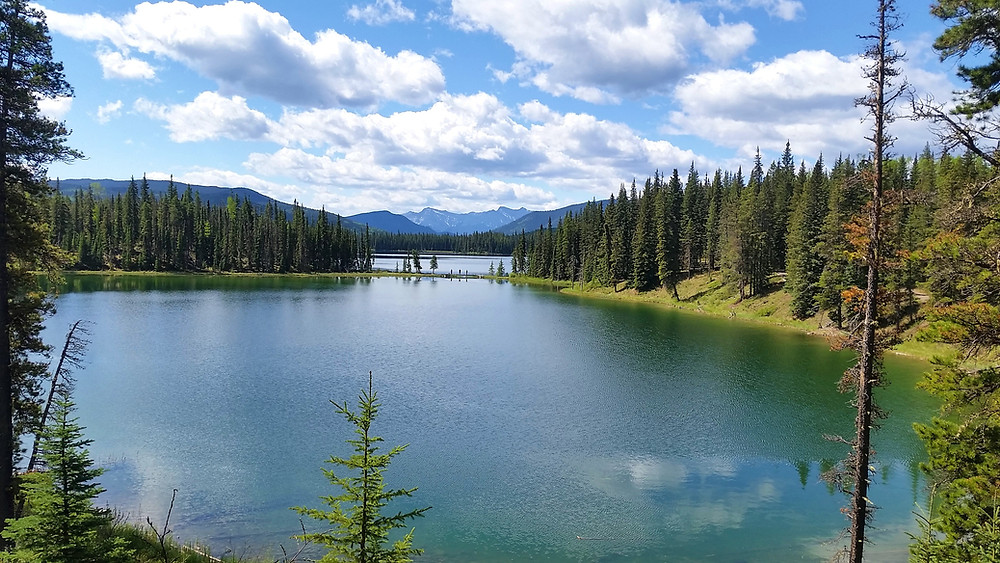 Lake view surrounded by tall green trees and mountains in Alberta.
