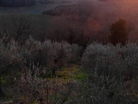 Residency in Umbria