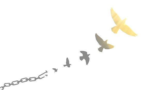 Oiseaux%20cha%C3%AEnes_edited_edited_edi