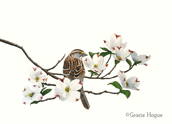 White-Throated Sparrow in a Dogwood Tree Branch