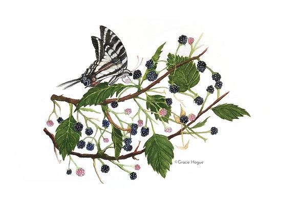 Zebra Swallowtail Butterfly on Blackberries