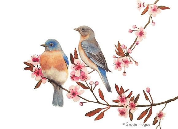 Bluebirds in a Cherry Tree Branch