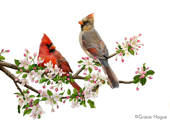 The Promise of Spring: Cardinals in Apple Blossoms