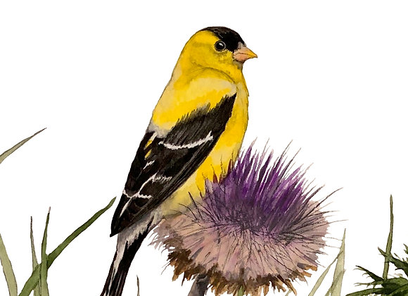 Goldfinch on Thistle Sprig