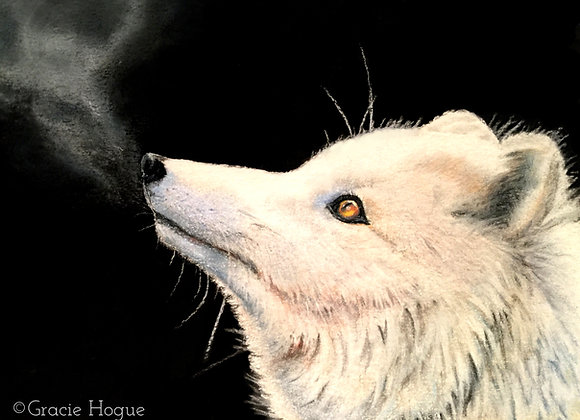 """Whisper"" Arctic Fox"