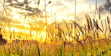 meadows-sunset-F6CG9P7_edited.jpg