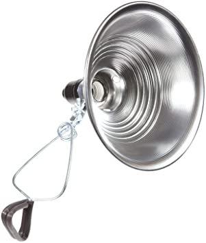 Dish Lights