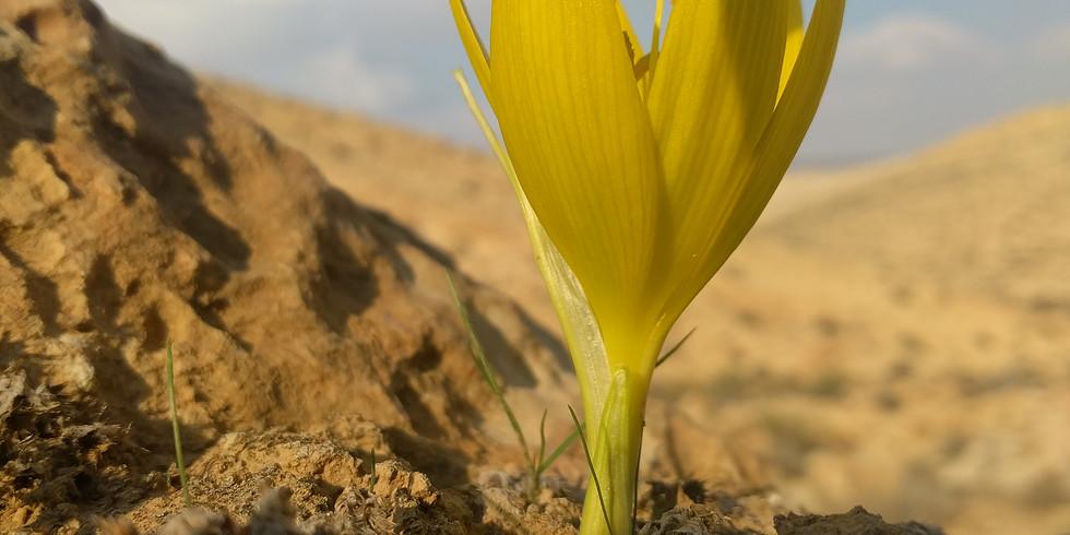 זהב פורח במדבר - סיור בשמורת החלמוניות