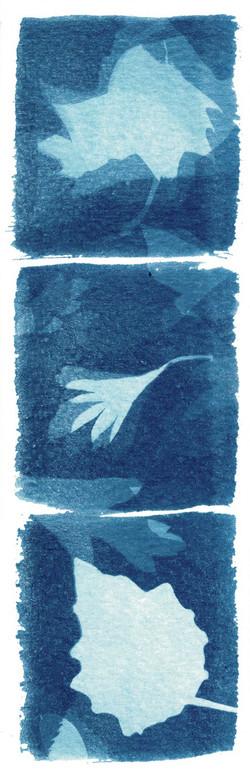 הדפס שמש 2
