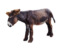 donkey-3332636_1920.png
