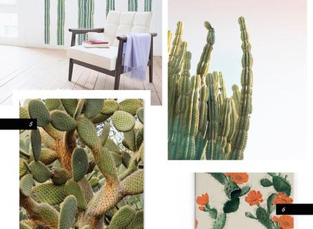 Cacti Moment