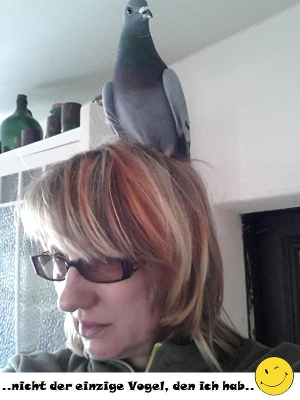 Vogel0