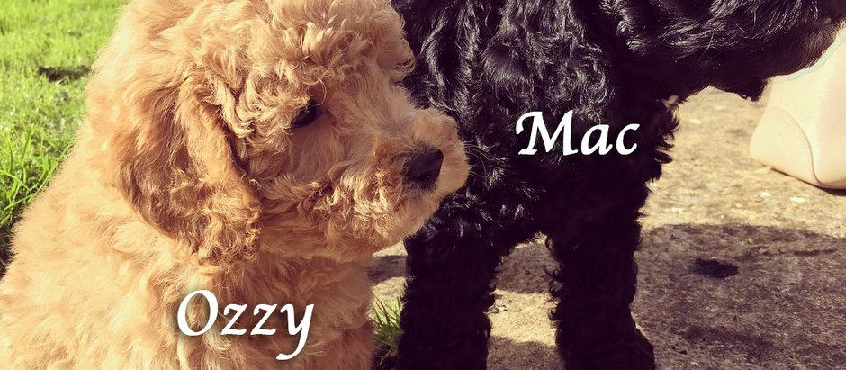 Introducing Mac & Ozzy!