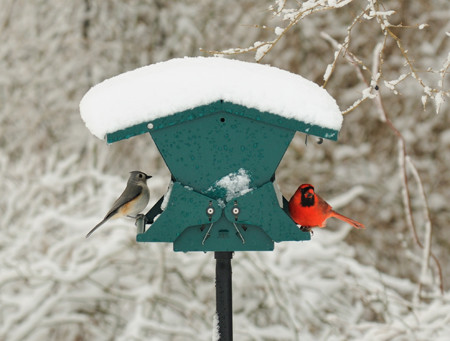 Project FeederWatch Engages Citizen Scientists in Thirty-Year Study of Winter Birds