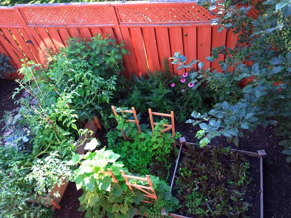 my Michigan courtyard vegetable garden, July 2018