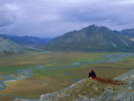 Arctic Refuge is Target for GOP Tax Plan Bailout