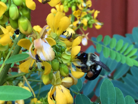House Farm Bill's Poison Pollinators Provision is an attack on pollinators, insects, and birds. A vo