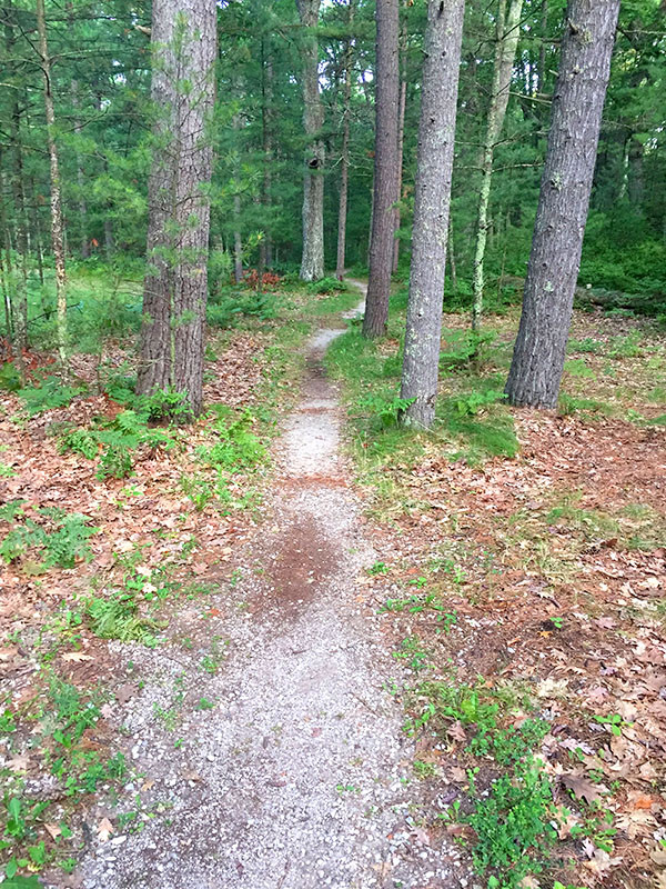path to walk-in campsite at Platte River, Sleeping Bear Dunes Nat'l Lakeshore