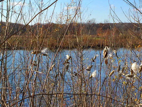 Controversial bill rushed through Michigan Lame Duck would result in loss of birding and wildlife ha