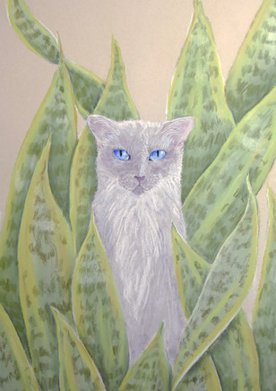 Cat and Sansevieria.jpg