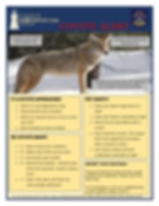 Coyote SMART.JPG