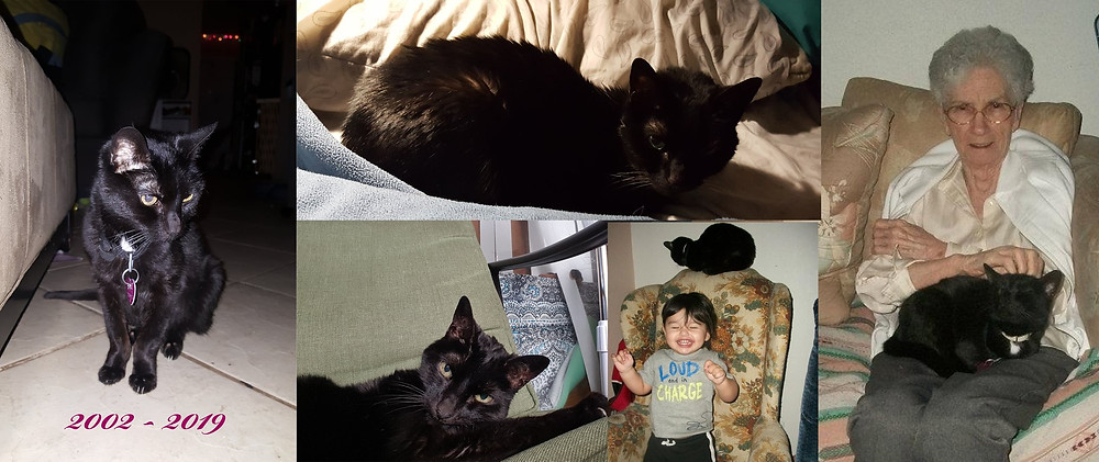 Collage - 5 pictures of our little black kitty