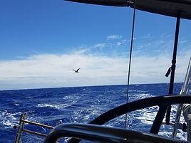 Open Ocean bird.jpg