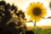 light-nature-sky-sunset-33044.jpg