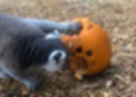 Remi Pumpkin 3.jpg