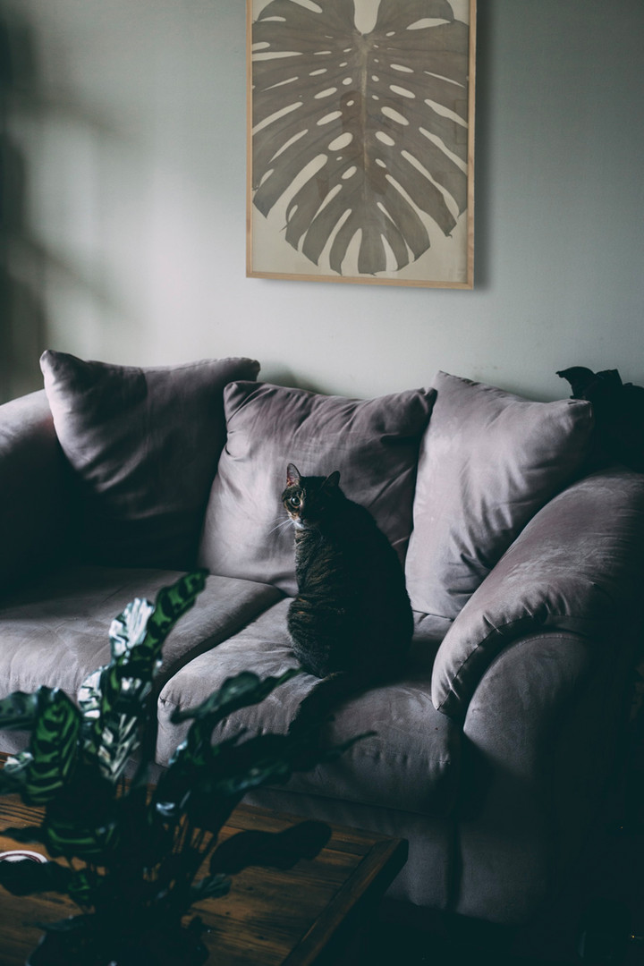 Cat Couch Mood.jpg