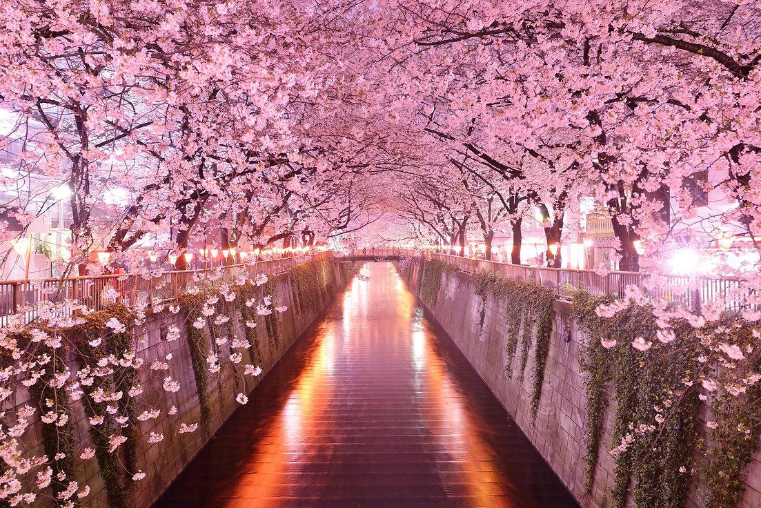sakura-wallpapers-62237-2214023.jpg