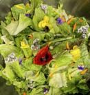 Salade du jardin fleurie