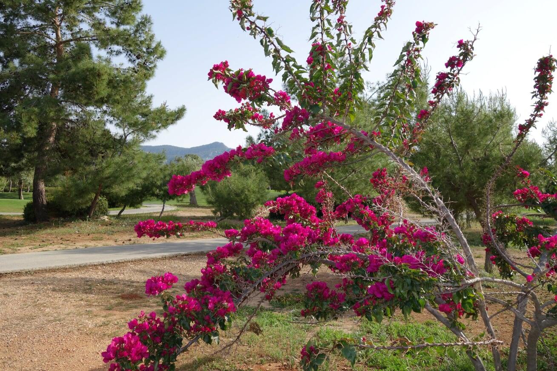 Golfskola blomma