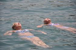 Två_sälar_i_vattnet