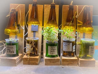 Self-watering planters made from glass bottles.