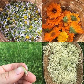 4 Herbs photo.jpg