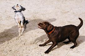 adorable-animals-canine-998254.jpg