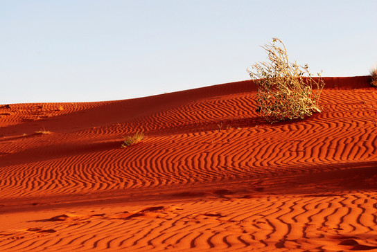 Sandhill shadows