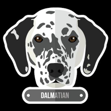 ANDG11-9585-DALMATIAN