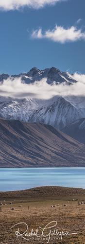 Colours of the Mackenzie, New Zealand