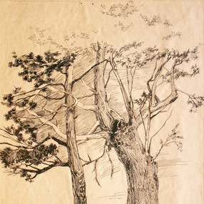 trees #3