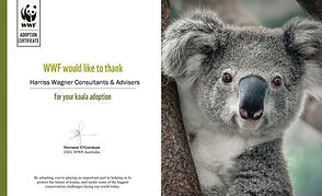 Adopt a Koala.jpg